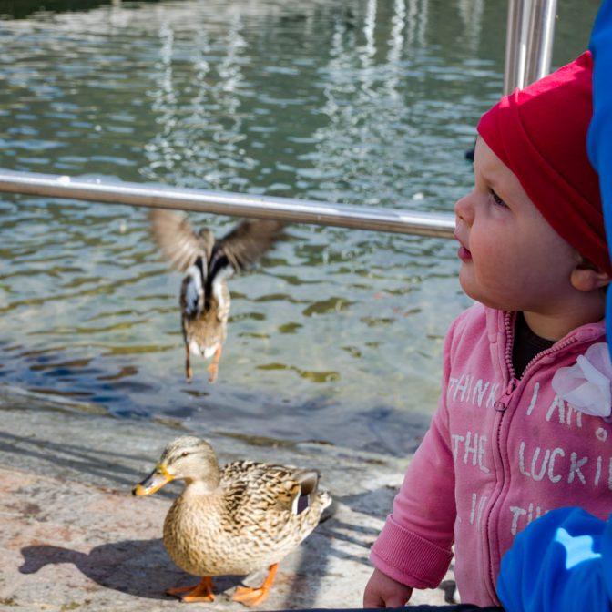 Anna und die Enten