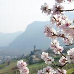 Kurtatsch im Frühling