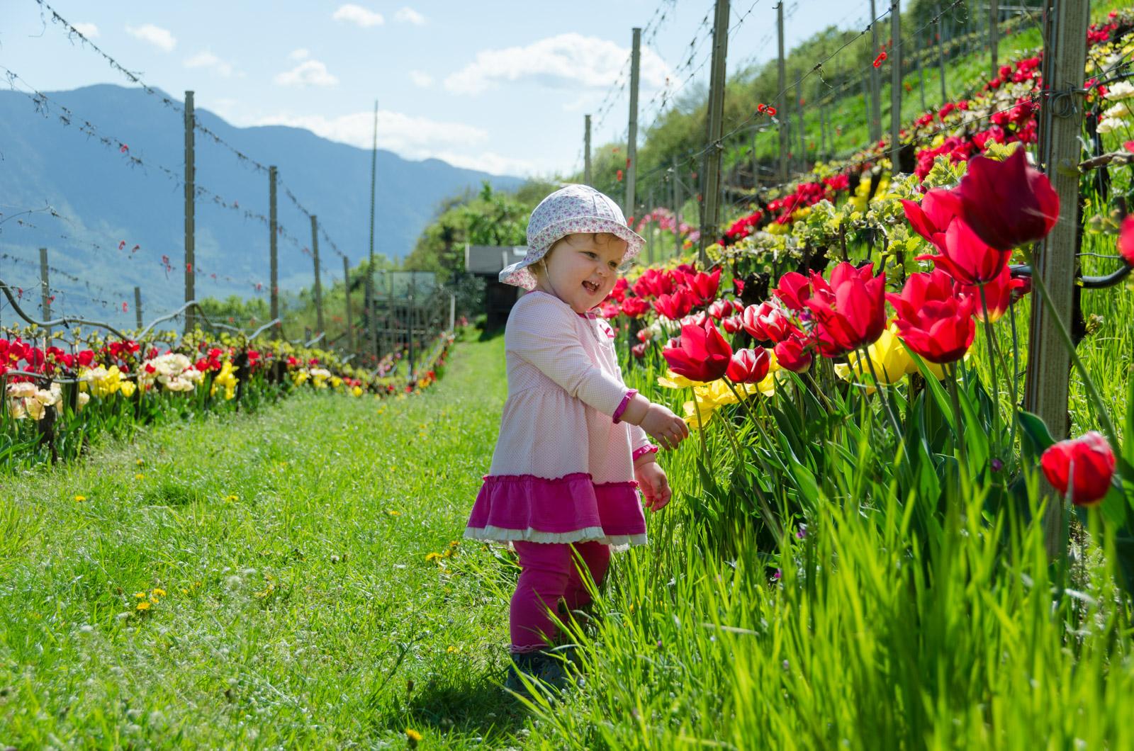 Tulpenpracht im Weinberg