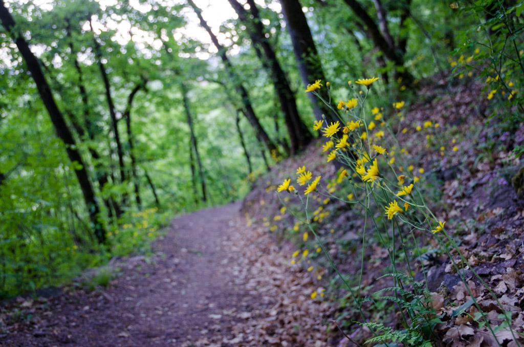 Naturerlebnisweg Tramin