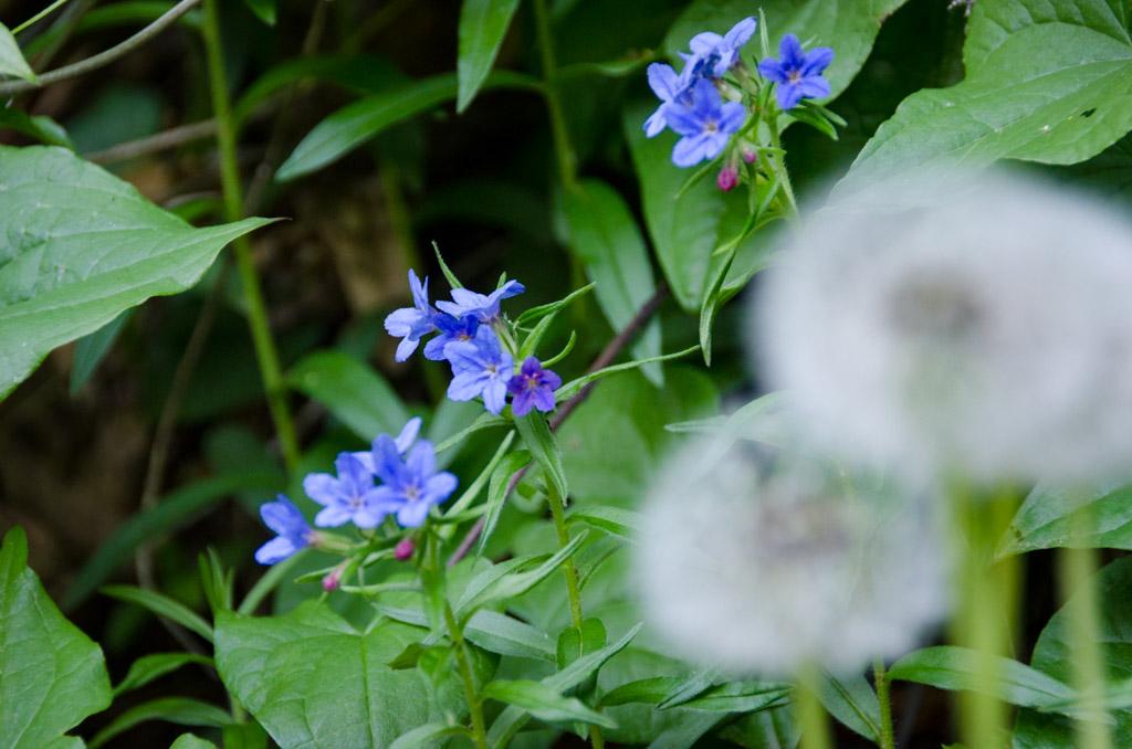 Blumen am Naturerlebnisweg Tramin