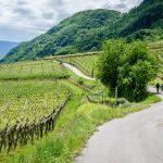 Spazierweg durch die Weinberge
