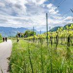 Spazierweg zwischen St. Josef am See und Kaltern