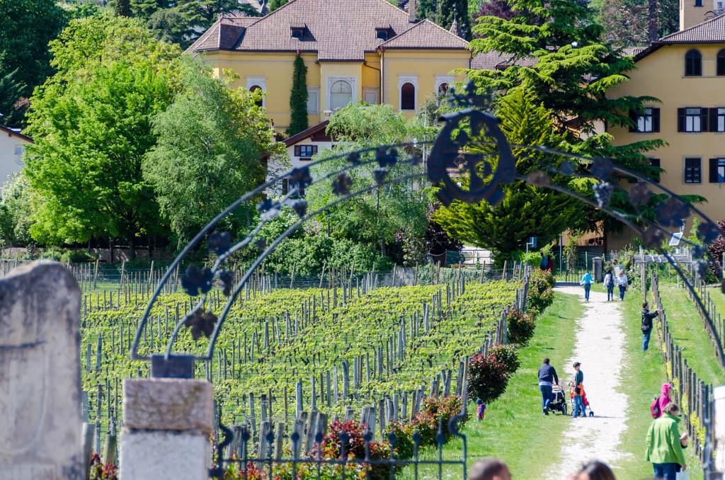 Weinlehrpfad Castel Sallegg Kaltern