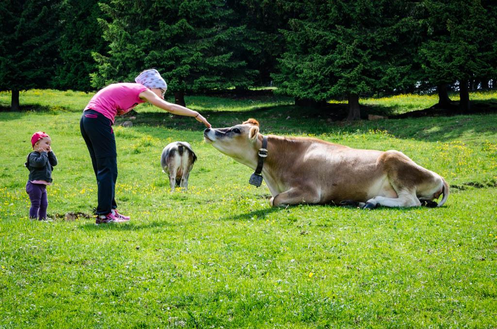 Anna, Anni und die Kühe