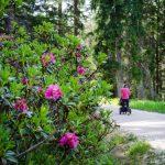 Alpenrosen mit Kinderwagen