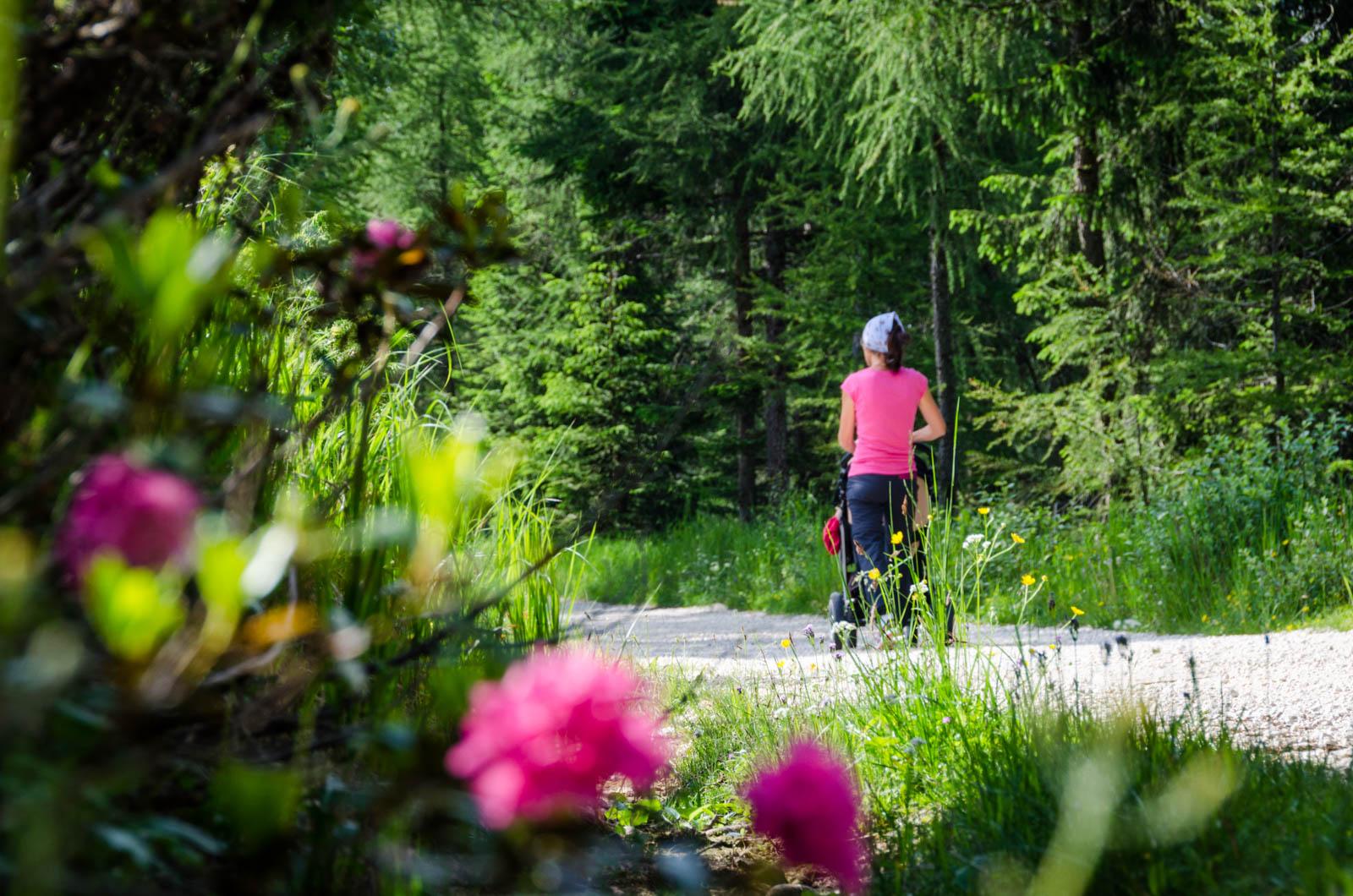 Wandern mit Kinderwagen - Alpenrosen