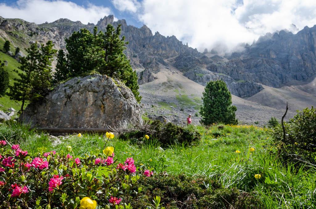 Alpenrosen und LAtemar