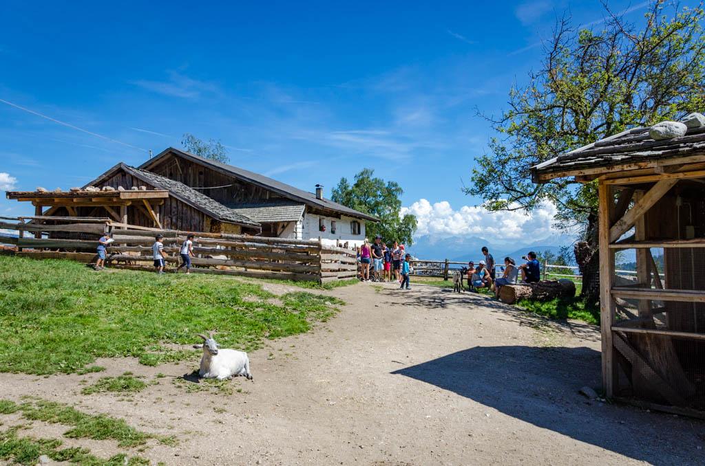 Tierwelt Rainguthof