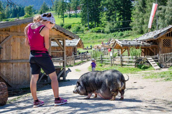 Einen Bauch der den Boden streift, dem Hängebauchschwein macht seine Fettleibigkeit nichts aus.