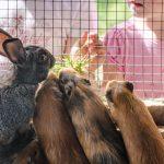Hase und Hamster Tierwelt Rainguthof