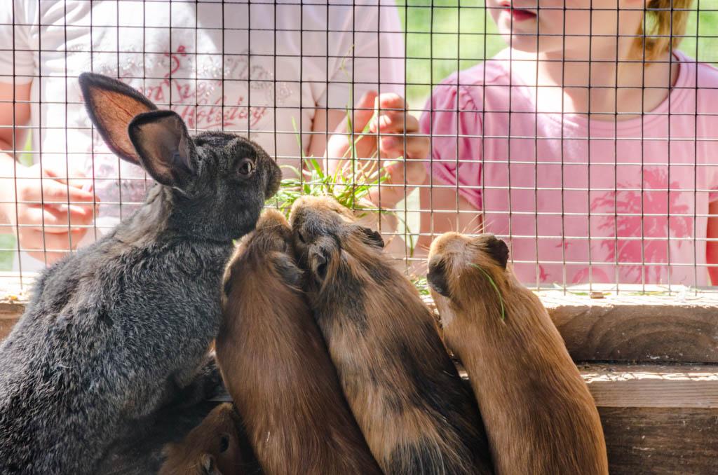 Hase und Hamster Tierwelt Rainguthof Wandern Südtirol