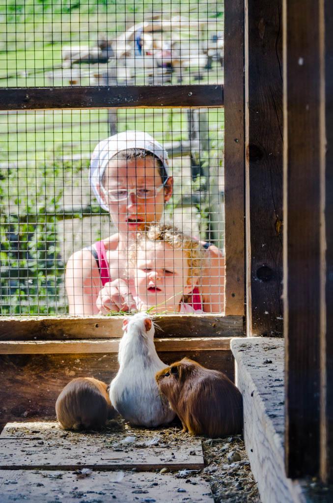 Hamster Tierwelt Rainguthof