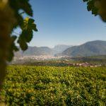 Blick von Eppan-Berg nach Bozen