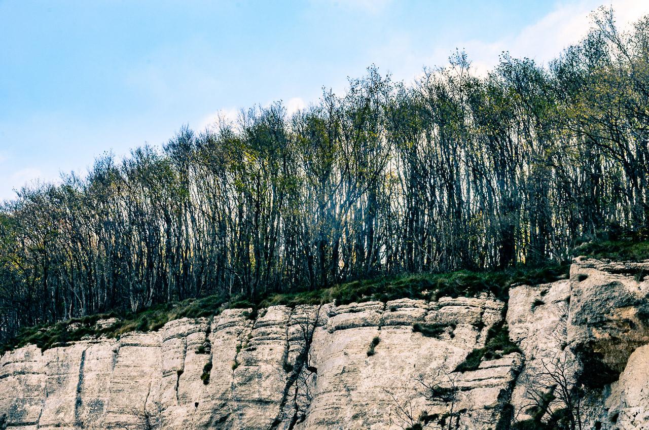 Abbruchstelle, Grenze, Wald