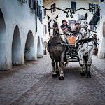 Kutschenfahrt Neumarkt