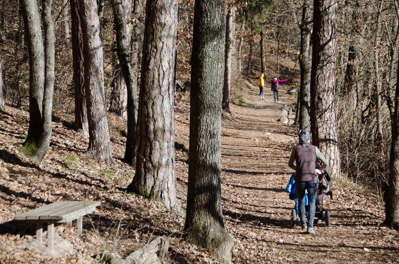 Spazieren im Montiggler Wald