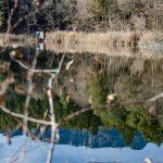Am Kleinen Montiggler See