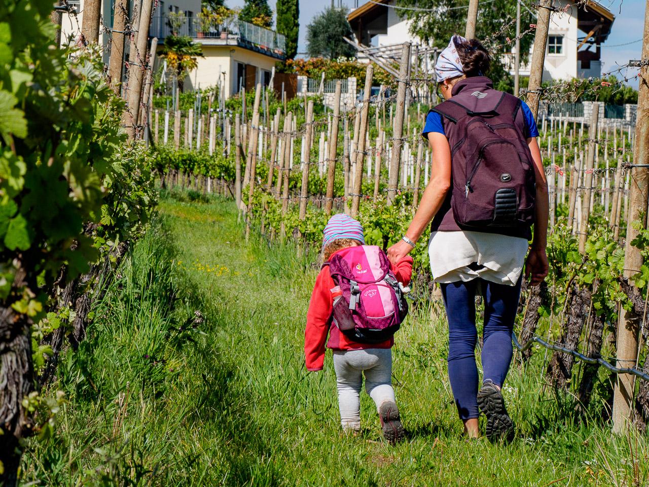 spazieren in den Weinbergen