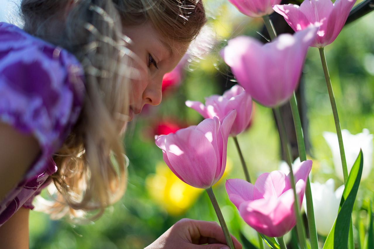 Anna und die Tulpen