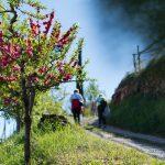 spazieren im Frühling