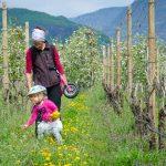Anna mit Rad in den blühenden Weinbergen