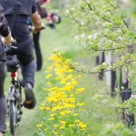 Rad fahren Blüte