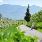 spazieren und Rad fahren in der Apfelblüte