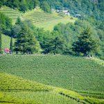 Kolbenhof - Gewürztraminer Weinwandertag Tramin