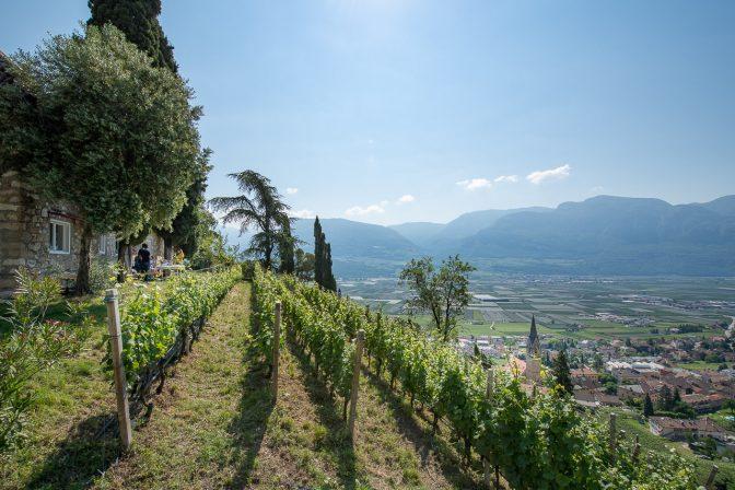 Weingarten bzw. Vigna Kastelaz