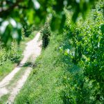Wandern - Gewürztraminer Weinwandertag Tramin
