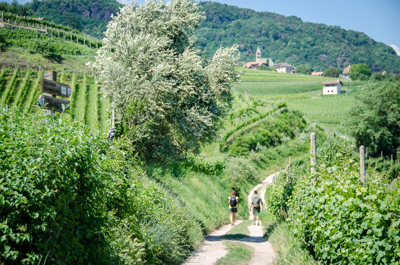 Wandern - Gewürztraminer Weinwanderung Tramin