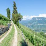 Kastelaz - Gewürztraminer Weinwandertag Tramin