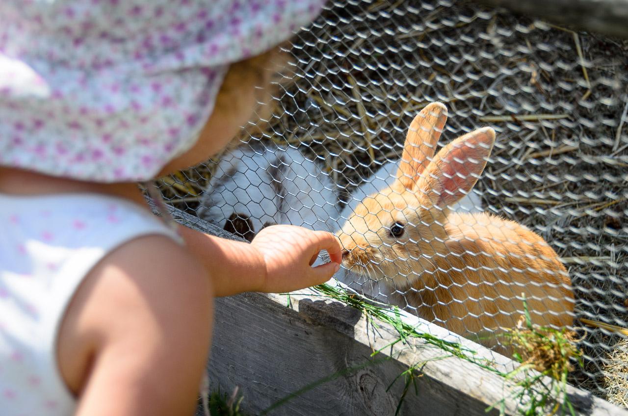 Steicheltiere Hasen auf der Rinderplatzhütte
