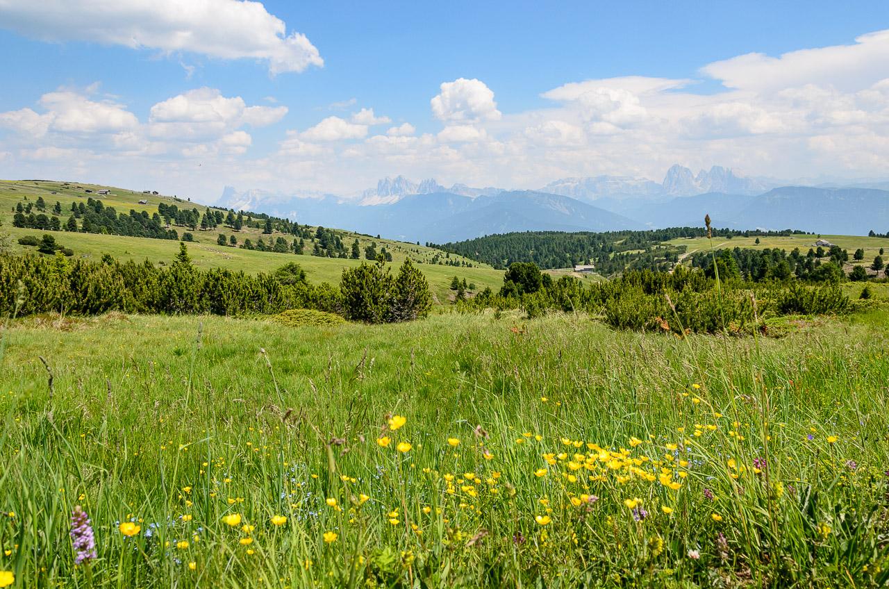 Blick von der Villanderer Alm zu den Dolomiten: Geisler, Sella, Lang- und Plattkofel
