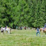 reiten auf dem Haflinger Almfest