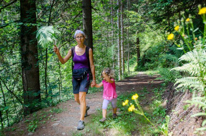 Blumen und Farne am Wegesrand des Naturlehrpfades St. Pankraz