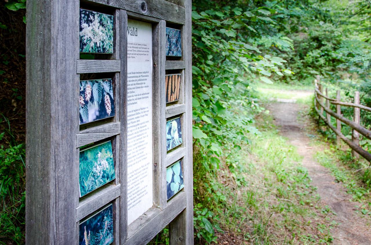 Informationstafel am Naturlehrpfad St. Pankraz