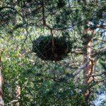 Nest, Wald