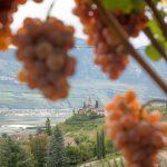 Blick durch die Gewürztraminer Traube zum St. Jakob Kirchlein