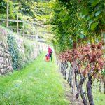 spazieren entang der Weinberge