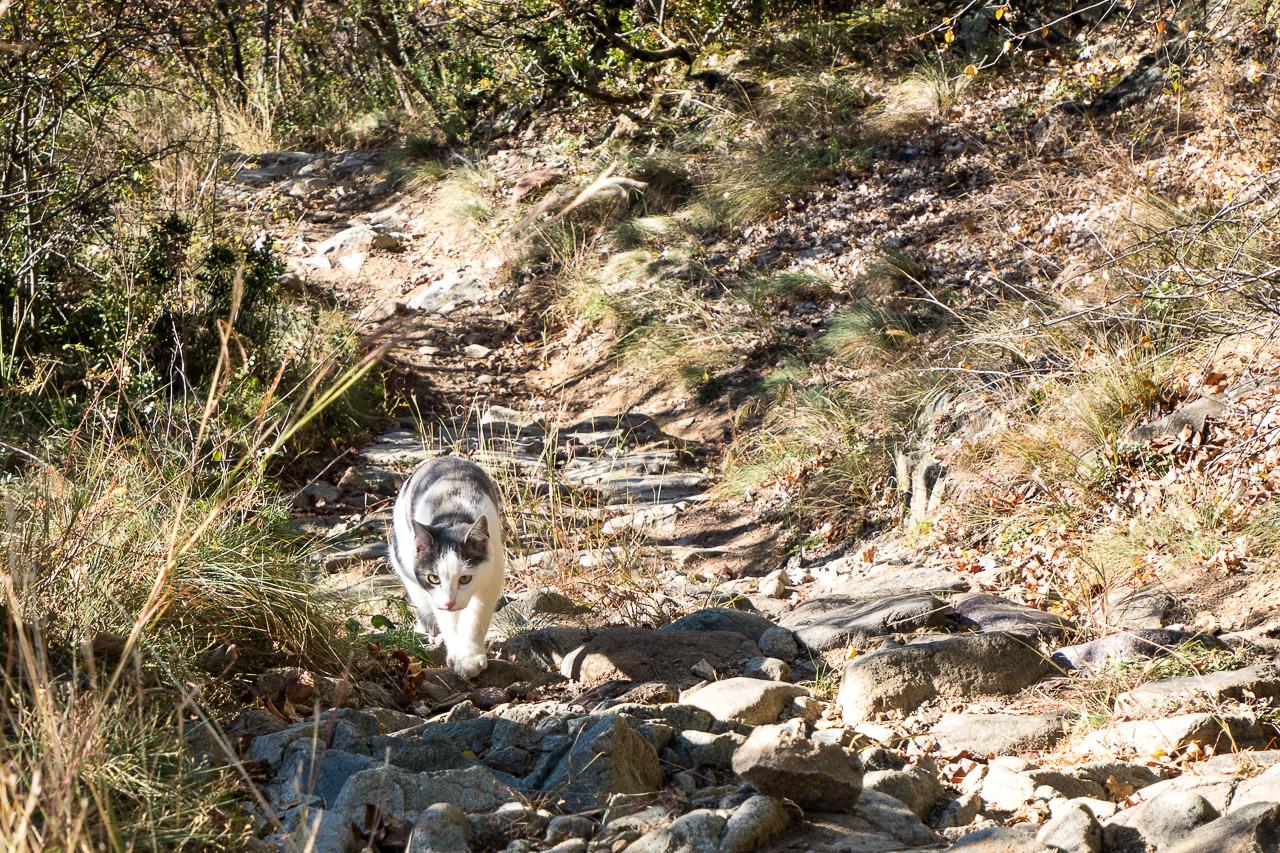 Wandern mit Katze von Vilpian zum Buschenschank Oberschol Hof
