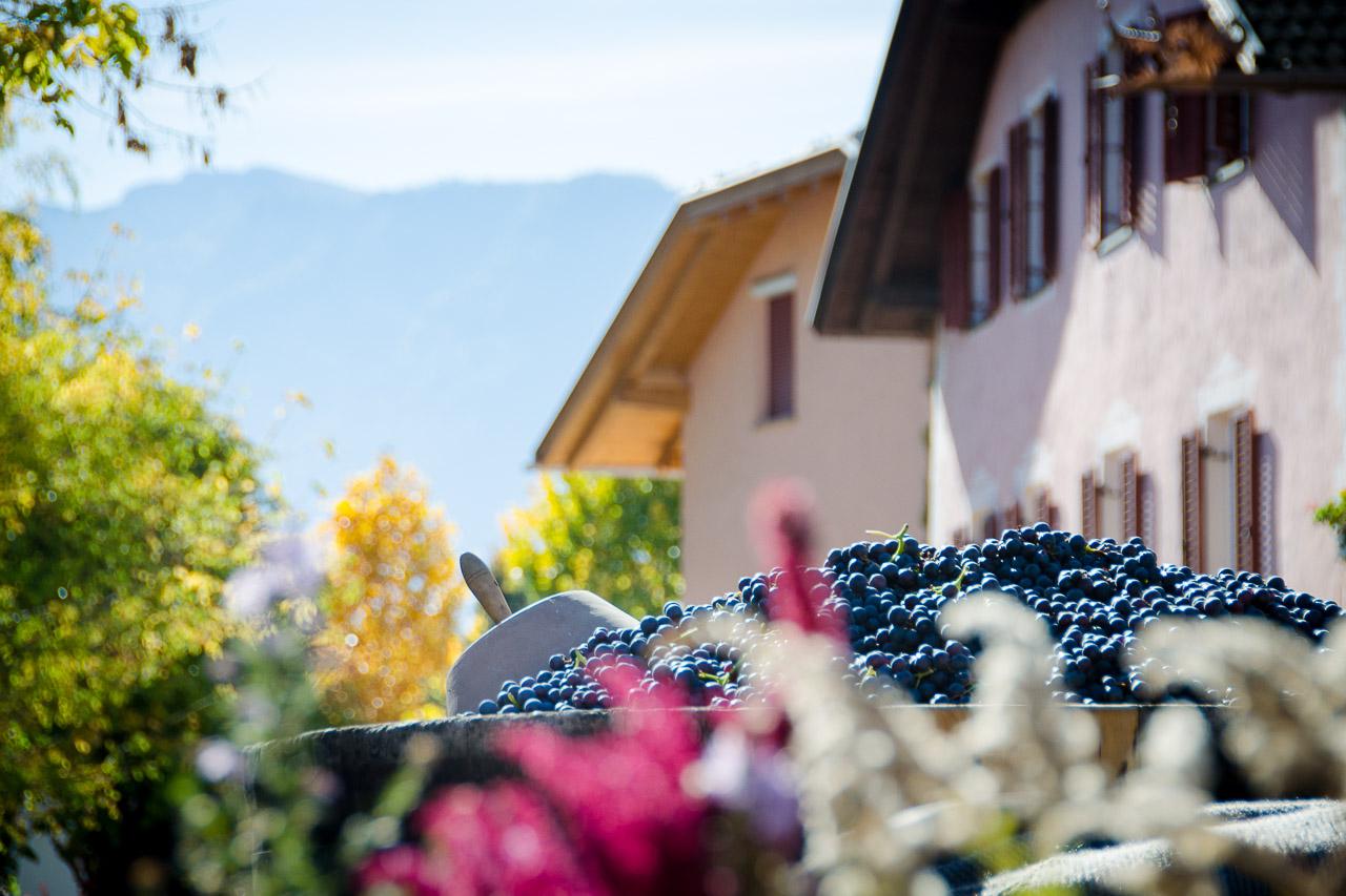 Weinlehrpfad Girlan - Wandern Südtirol bis Gardasee: Wandertipps ...