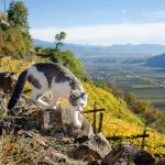 Katzenblick ins Etschtal