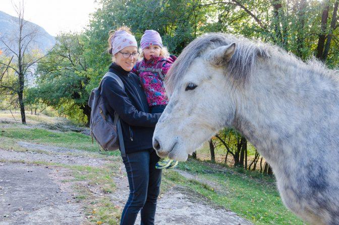 Isländer Pferd auf Castelfeder