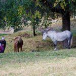 Pferd auf Castelfeder