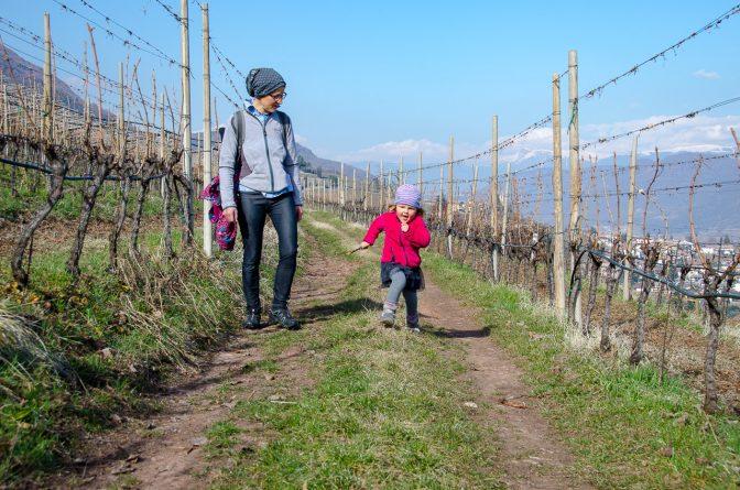 """Durch die """"Leitn"""" - auf dem Gewürztraminer Weinweg"""