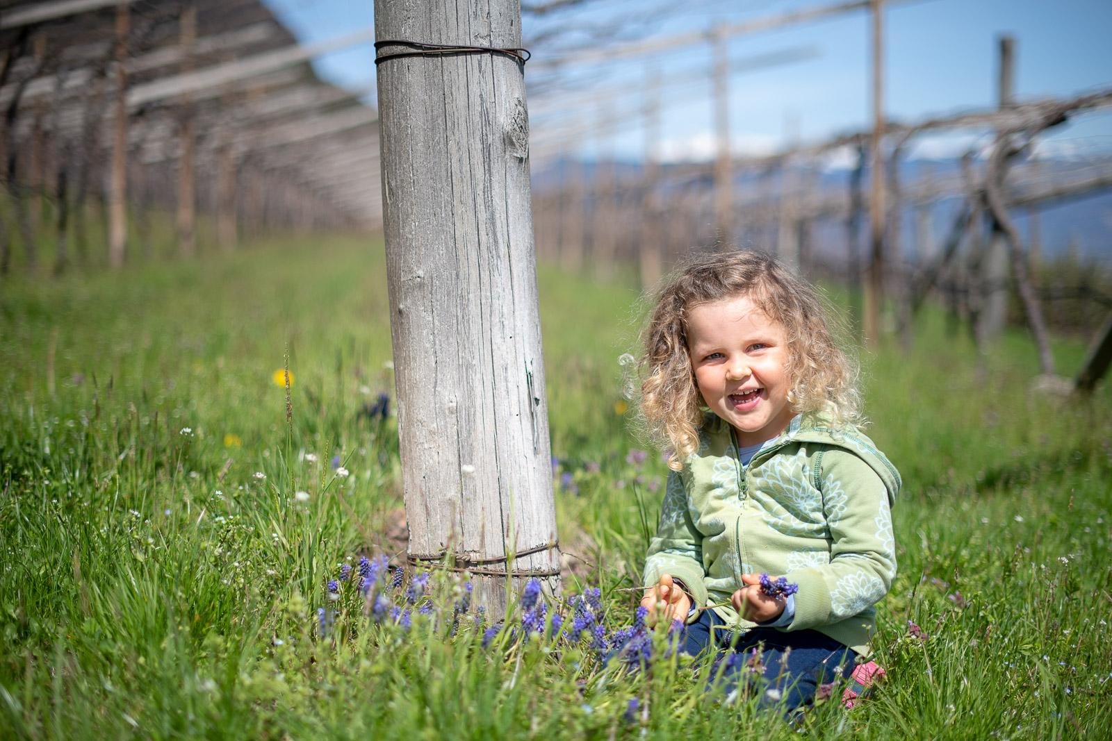 Frühling in Kalterns Weinbergen