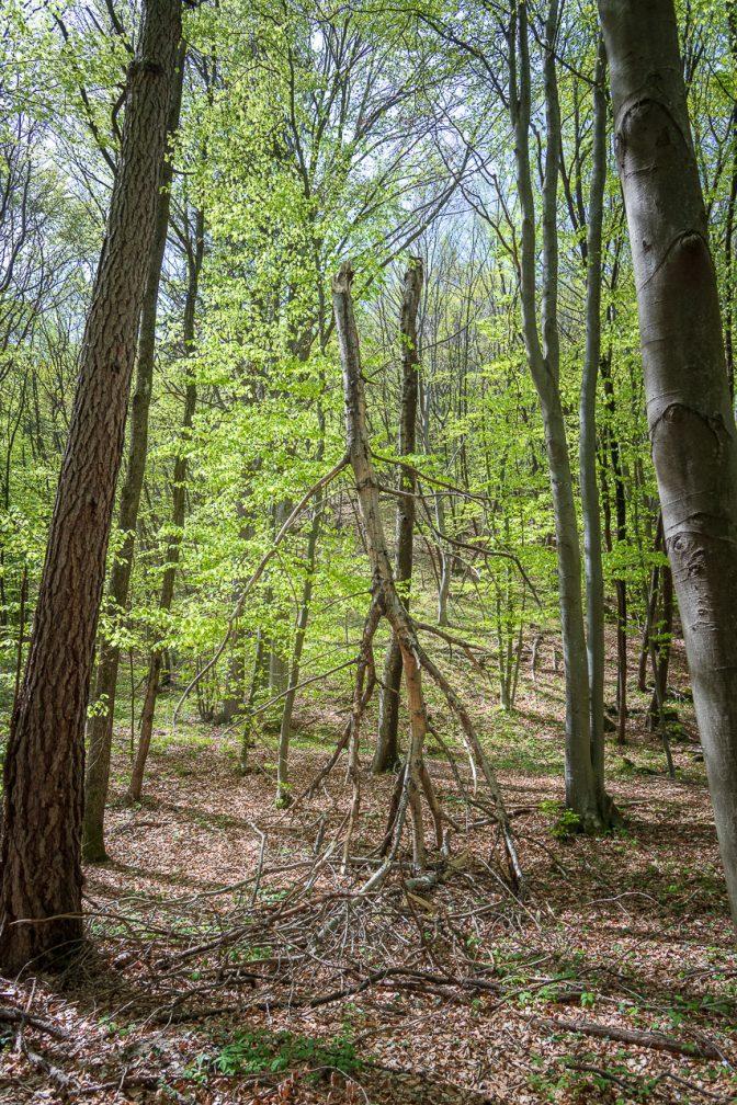 umgebrochener Baum