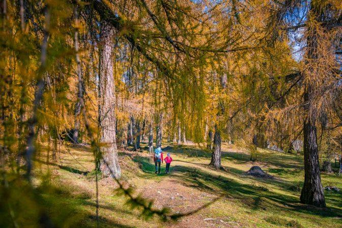 Herbststimmung im Lärchenwald von Altrei